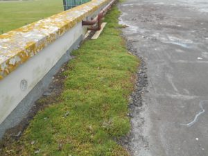 flat roof maintenance - grass